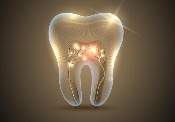 Quais são as diferentes partes dos dentes?
